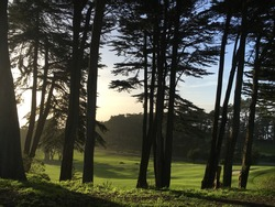 a landsacpe of forests at dusk in sanfrancisco
