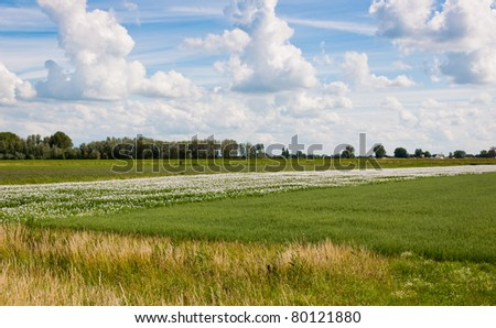 A landscape in the Netherlands with colorful fields and a blue sky with white clouds