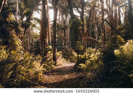 A landscape of a raphia palm forest Photo stock ©