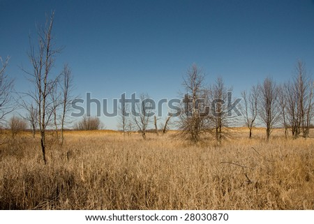 A landscape of a wetlands in the US state of Ohio in  early spring
