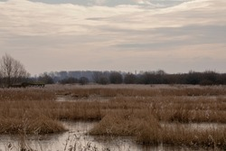 A landscape of an ancient English, frozen marshland reed bed.