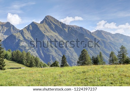 A landscape of blue cloudy sky, high mountains, fir and pine tree forests and green pastures in Val d'Otro, Piedmont region, Alps mountains, Italy Foto stock ©