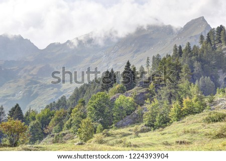 A landscape of blue foggy sky, high mountains, fir and pine tree forests and green pastures in Val d'Otro, Piedmont region, Alps mountains, Italy Foto stock ©