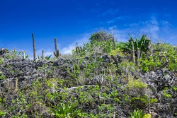 A landscape scene looking up at the vegetation that grows on the top of the bluff in Cayman Brac