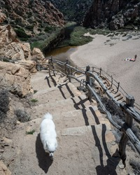 A landscape view of a white beach in the distance below and a dog going up the stairway while the owner is keeping an eye on it from the far distance.