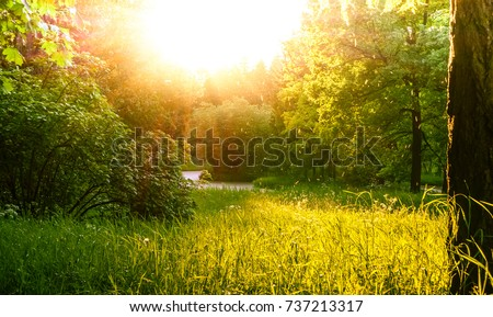 A landscape with greenery and sun. - Shutterstock ID 737213317