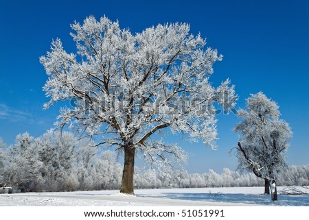 A landscape with rime, frost and snow on tree in winter.