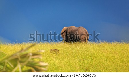 A large African bush elephant, dwarfed by the sky and grassland. Warthog hidden in grass. Animal in wild. #1473624695
