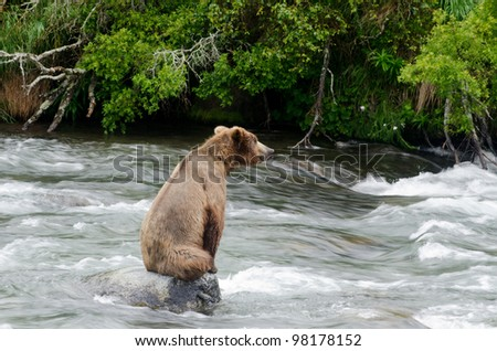 A large Alaskan brown bear on a rock fishing for salmon in Katmai National Park