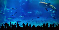 A large aquarium at Churaumi Aquarium in Okinawa, Japan