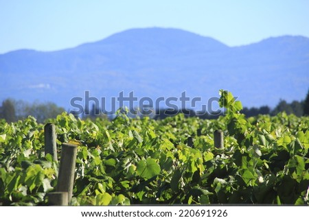 A large blueberry crop with a mountain range and shallow depth of field in Washington State/Washington Fruit Crop and Mountain Range/A berry crop with mountains and shallow DOF in Washington State