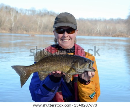 A large bronze smallmouth bass fish being held horizontally by a woman in a drysuit on a blue river in winter on a sunny day #1348287698
