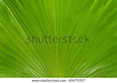 A large close-up of a green palmate palm frond.