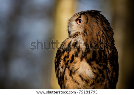 A large eagle owl in the forest