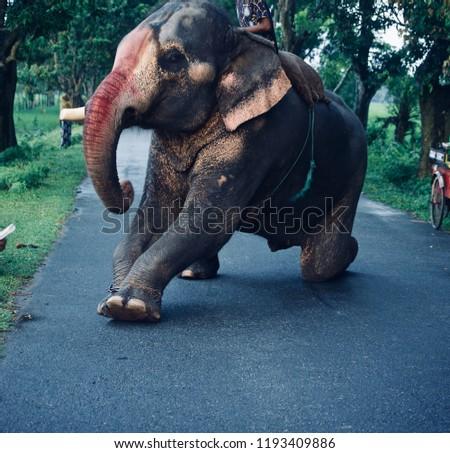 Stock Photo A large elephant sitting on the street unique photo