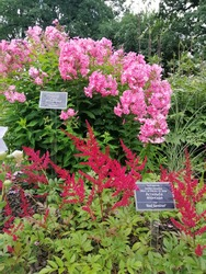 a large flowerbed or mix border of blooming flowers with metal signs with the names