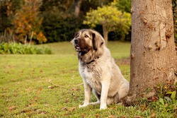 A large fluffy mixed-breed dog in a large garden.