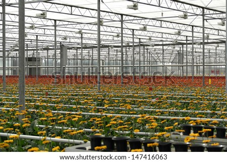 A large greenhouse with a lot of flowers