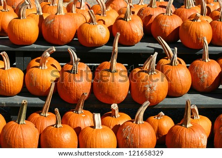 A large group of bright orange pumpkins