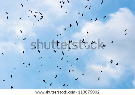 A large group of crows against blue sky