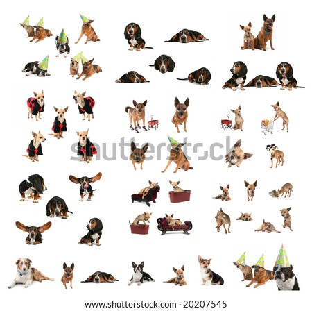 a large group of dogs in one image
