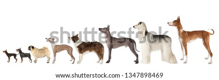 A large group of dogs of different breeds and various sizes standing on a white background #1347898469
