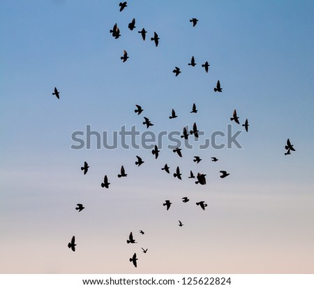 A large group of pigeons against the sky.