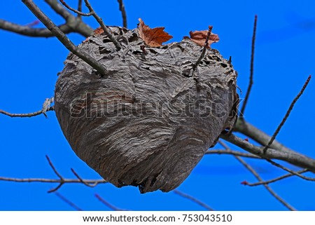 a large hornet's nest attached...