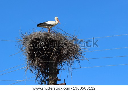 A large nest of twigs with a white stork on a pole