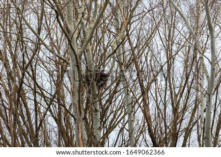 A large nest that is high in the trees