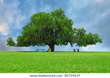 A large oak tree in a grass field in a park used as a shade tree for picnic tables on a gorgeous summer day with room for your text.