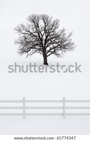 A large oak tree without leaves stands tall in a snowy field behind a fence in idyllic holiday scene.
