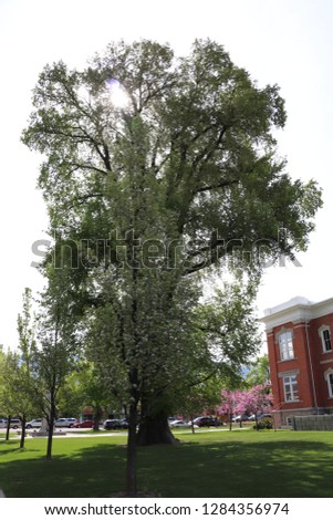 A large old tree next to the Cache Valley visitors center