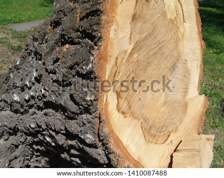 a large sawed piece of a large tree with a large bark lies on the green grass in the meadow #1410087488
