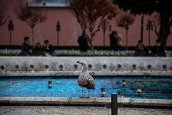 A large seagull near a fountain in Istanbul.