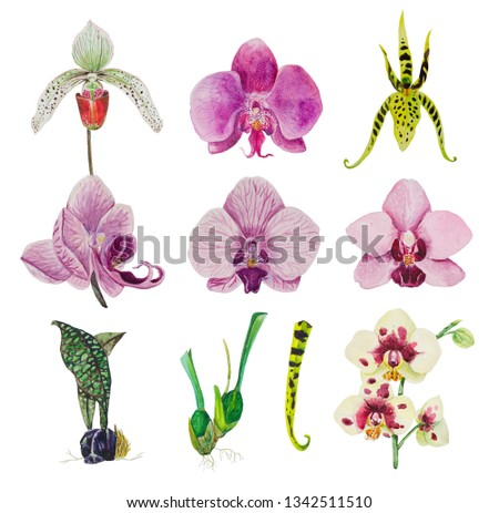 A large set of orchid flowers, phalaenopsis, cambria and cypripedium. Hand-painted in watercolor, suitable for blending in compositions or patterns. On a white isolated background