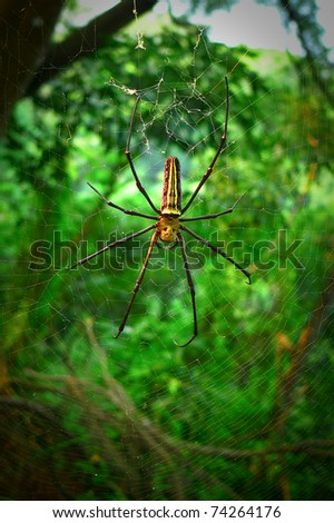 A large spider repairing its web