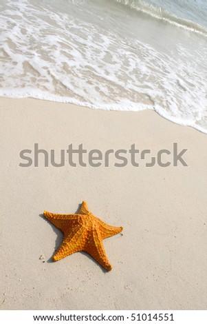 A large starfish on golden sandy beach