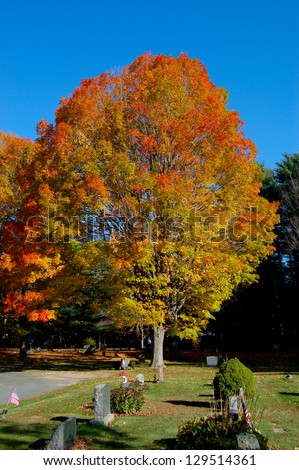 A large sugar maple tree in full autumn colors dominates this scene of a quiet New England cemetery. In the foreground are memorial stones and US flags.