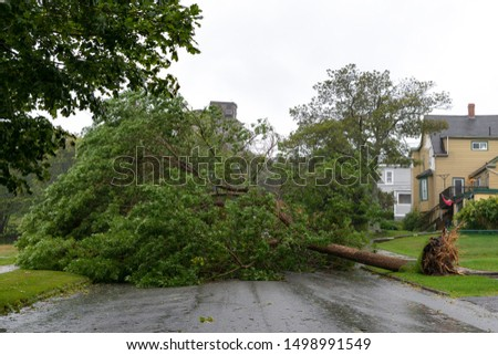 A large tree fallen across a road. The road is completely blocked. The tree fell due to high winds during Hurricane Dorian. Overcast sky. #1498991549