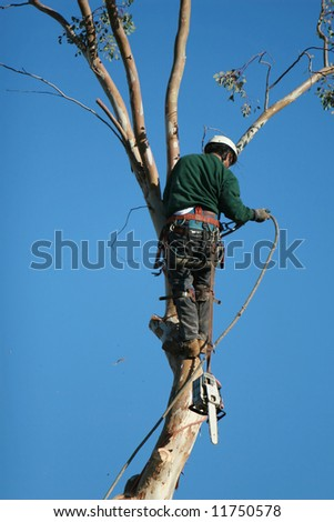 A large tree is being cut down by a man suspended ropes. A chainsaw dangles from the mans harness as he adjusts the ropes. - stock photo