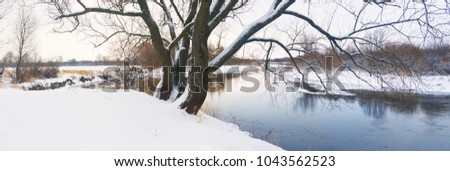 A large tree on the Bank of winter river.
