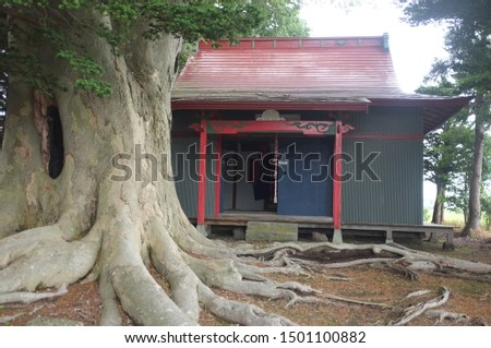 A large tree with a large hole and a small shrine.