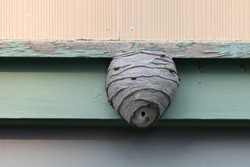 A large wasp hornet's nest is attached to a wood green wall. The grey papery material is in layers forming a round shape with a small circular opening at the bottom of the insect hive.