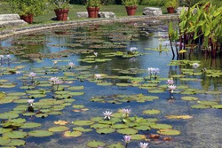 A large water garden filled with purple water lily flowers and pads, and  plants surrounded by large boulders and large potted plants