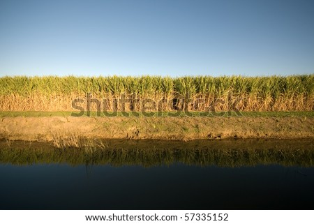 A late afternoon irrigation canal scene adjacent to a Sugar Cane field