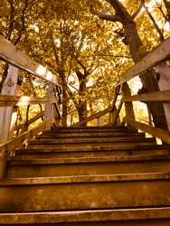 A lavish brown staircase surrounded by golden trees. The perfect picture to describe a beautiful fall afternoon in nature.
