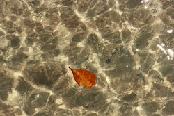 A leaf floats on the surface of the water. The water surface is so clear that you can see through and see the pebble below.