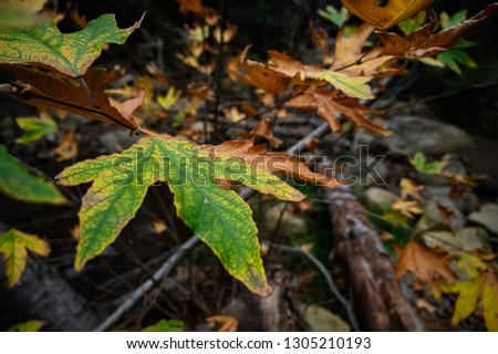 A leaf in the middle of the forest among other leaves #1305210193