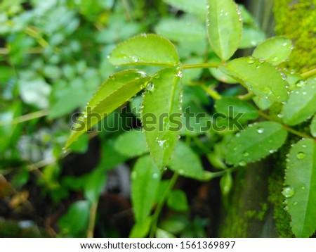 A leaf is an organ of a vascular plant. #1561369897